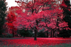 autumn-beautiful-british-columbia-canada-canadian-autumn-canadian-fall-Favim.com-54726[1]