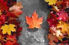 leafflag1[1]
