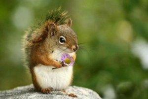 cute-squirrel-701[1]