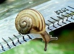 147379,xcitefun-funxone-the-tiniest-snails-8[1]