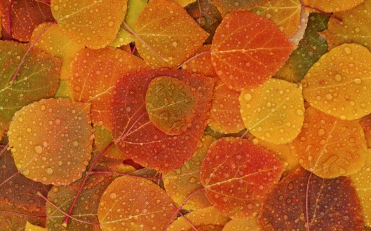 fall-leaves2