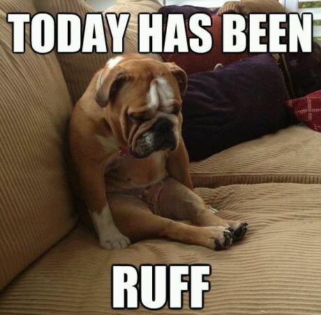 a-baa-ruff-day