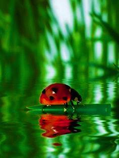4cf0f02cee2478b84762251fe60fbd75--ladybug-art-art-prints