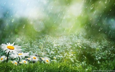 70_summer-rain-hd-wallpaper-summer-rain-images-new-wallpapers_2560x1600_h