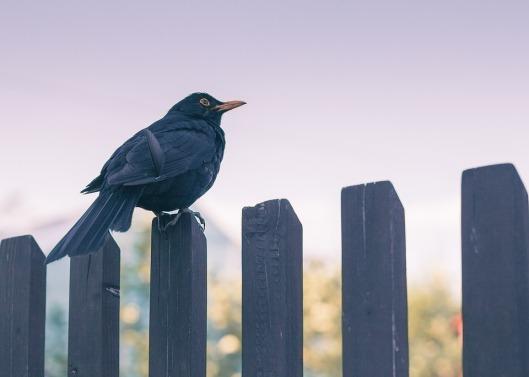 bird-3180681_960_720 (1)